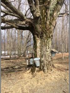 tree tap 1